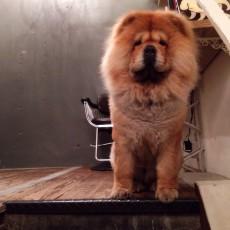 月曜日も営業!年中無休☆大阪市西区・中央区美容室TITYはペット同伴可能。
